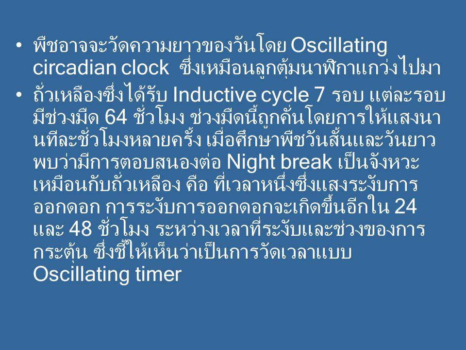 พืชอาจจะวัดความยาวของวันโดย Oscillating circadian clock ซึ่งเหมือนลูกตุ้มนาฬิกาแกว่งไปมา ถั่วเหลืองซึ่งได้รับ Inductive cycle 7 รอบ แต่ละรอบ มีช่วงมืด