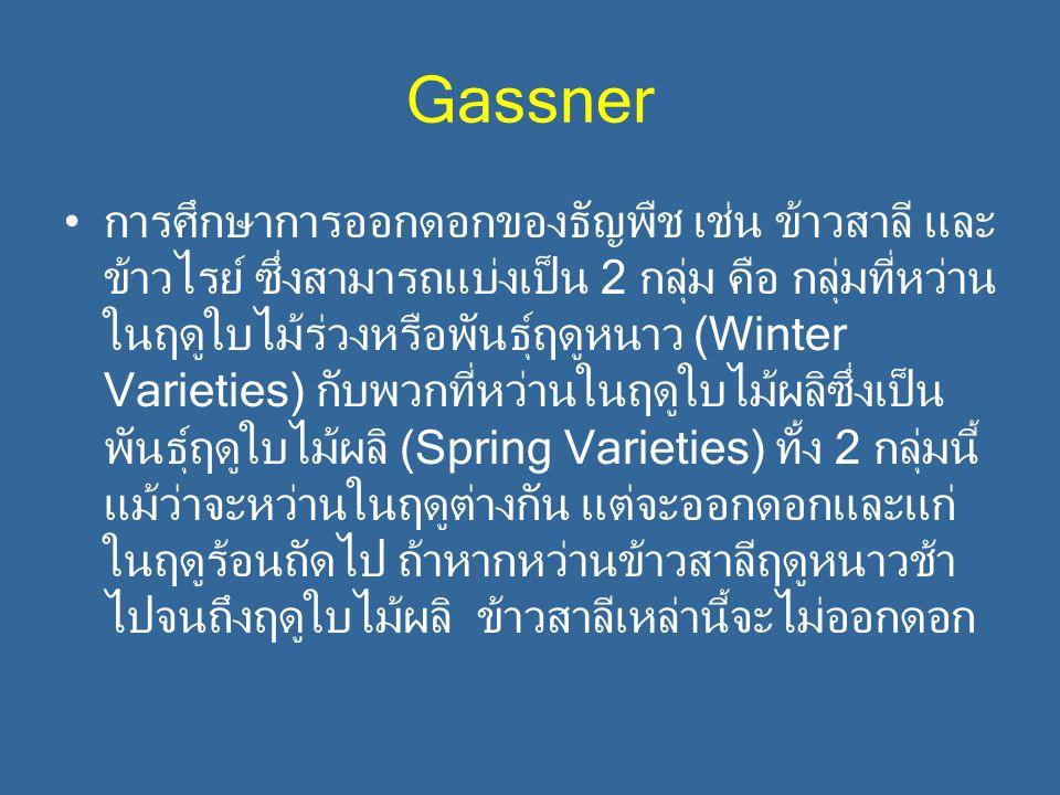 Gassner การศึกษาการออกดอกของธัญพืช เช่น ข้าวสาลี และ ข้าวไรย์ ซึ่งสามารถแบ่งเป็น 2 กลุ่ม คือ กลุ่มที่หว่าน ในฤดูใบไม้ร่วงหรือพันธุ์ฤดูหนาว (Winter Var