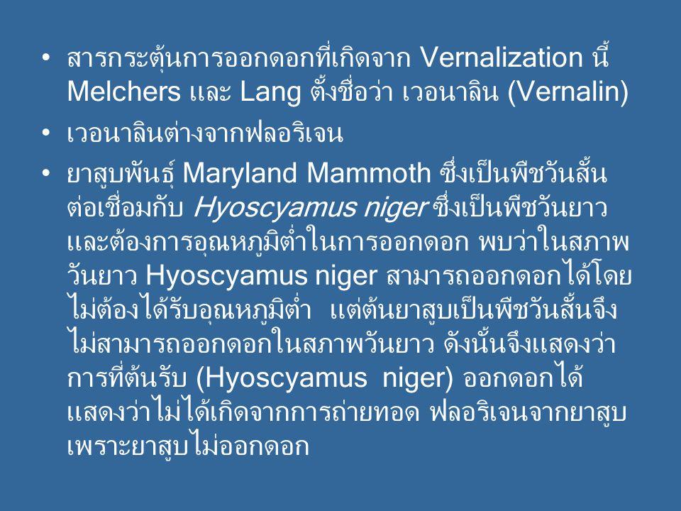 สารกระตุ้นการออกดอกที่เกิดจาก Vernalization นี้ Melchers และ Lang ตั้งชื่อว่า เวอนาลิน (Vernalin) เวอนาลินต่างจากฟลอริเจน ยาสูบพันธุ์ Maryland Mammoth