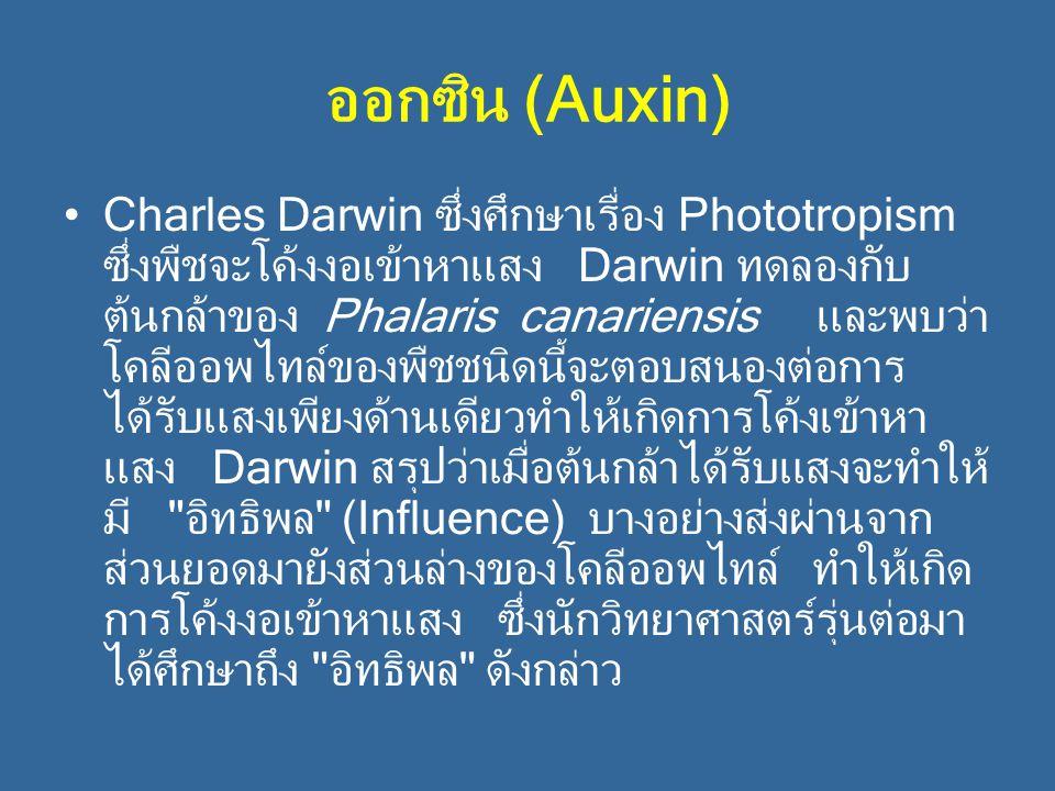 ออกซิน (Auxin) Charles Darwin ซึ่งศึกษาเรื่อง Phototropism ซึ่งพืชจะโค้งงอเข้าหาแสง Darwin ทดลองกับ ต้นกล้าของ Phalaris canariensis และพบว่า โคลีออพไท