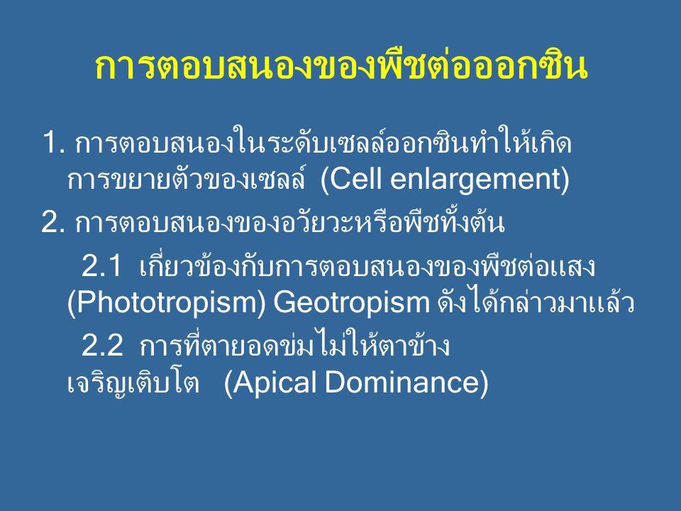 การตอบสนองของพืชต่อออกซิน 1. การตอบสนองในระดับเซลล์ออกซินทำให้เกิด การขยายตัวของเซลล์ (Cell enlargement) 2. การตอบสนองของอวัยวะหรือพืชทั้งต้น 2.1 เกี่