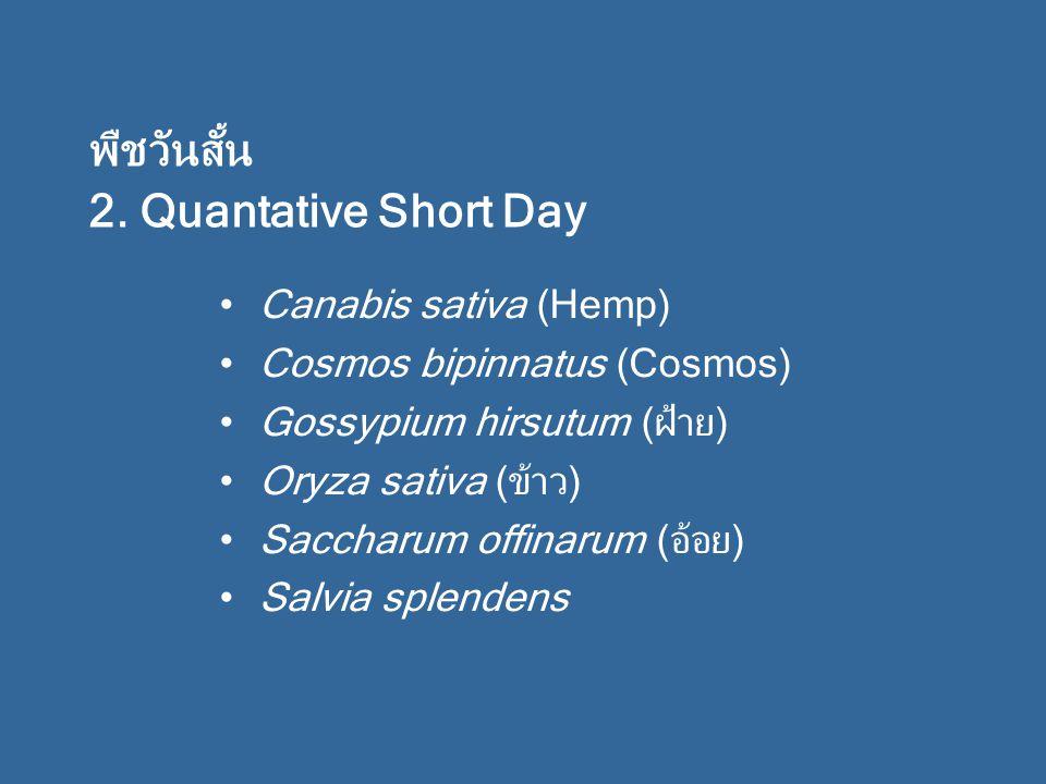 Canabis sativa (Hemp) Cosmos bipinnatus (Cosmos) Gossypium hirsutum (ฝ้าย) Oryza sativa (ข้าว) Saccharum offinarum (อ้อย) Salvia splendens พืชวันสั้น