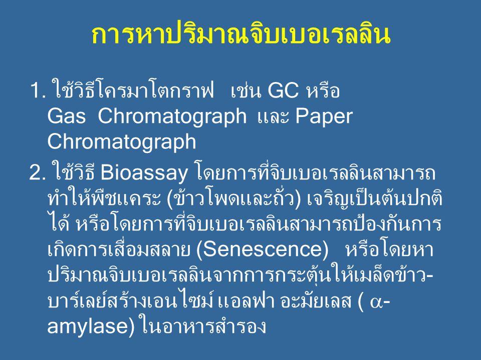 การหาปริมาณจิบเบอเรลลิน 1. ใช้วิธีโครมาโตกราฟ เช่น GC หรือ Gas Chromatograph และ Paper Chromatograph 2. ใช้วิธี Bioassay โดยการที่จิบเบอเรลลินสามารถ ท