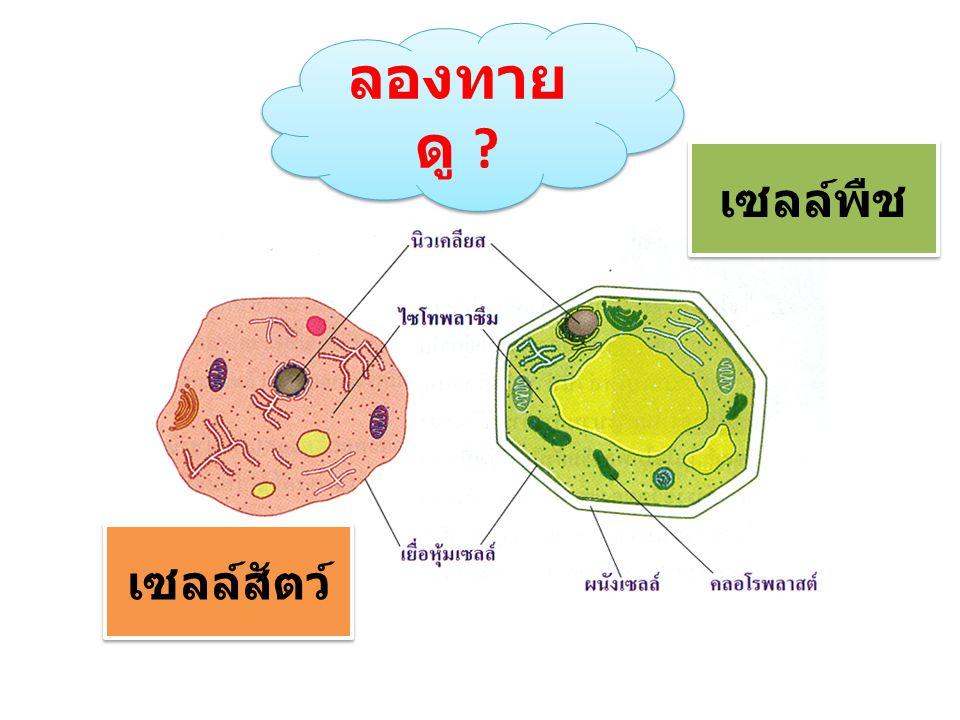 ลองทาย ดู ? เซลล์สัตว์ เซลล์พืช