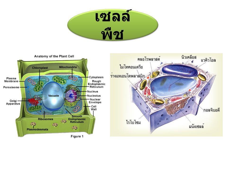 เซลล์ สัตว์