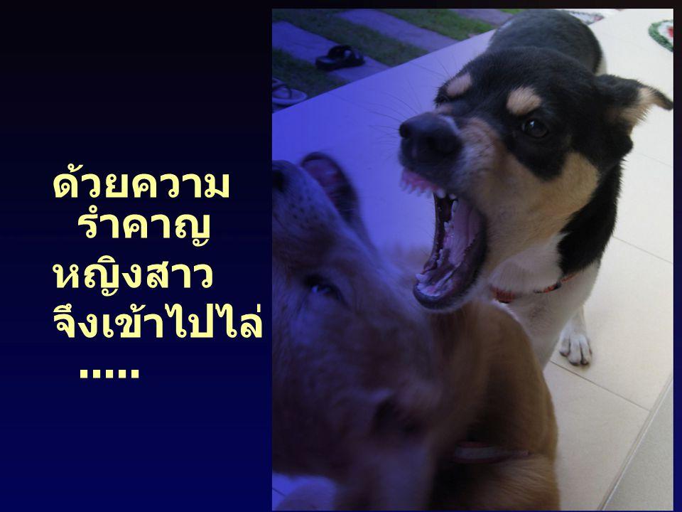 สุนัข เมื่อ ถูกไล่ ก็ วิ่งหนีไปด้วยความ กลัว แต่ไม่ช้า สุนัข ทั้งสอง ก็กลับมา คำราม ขู่กัน ในพื้นที่เดิมอีก หญิงสาว ก็เดินเข้าไปไล่มันอีก มันก็ วิ่ง หนี และกลับมา แบบเดิมอีก