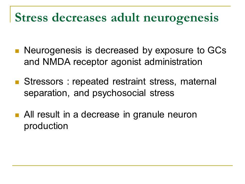 Stress decreases adult neurogenesis Neurogenesis is decreased by exposure to GCs and NMDA receptor agonist administration Stressors : repeated restrai