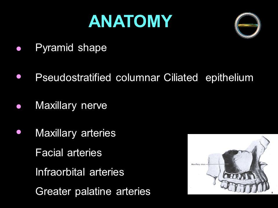 SuperiorOrbit, infraorbital nerve Inferior Alveolar process of maxilla, root of molar + premolar [ 7,6,8,5,4,3 ] Medial Nasal cavity, middle meatus AnteriorCanine fossa, Infraorbital foramen Posterior Pterygopalatine fossa Wall of maxillary sinus