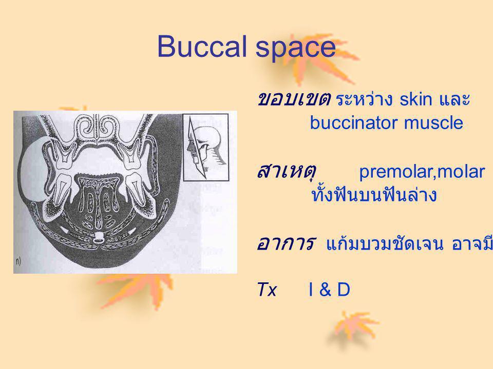 Buccal space ขอบเขต ระหว่าง skin และ buccinator muscle สาเหตุ premolar,molar ทั้งฟันบนฟันล่าง อาการ แก้มบวมชัดเจน อาจมี trismus Tx I & D