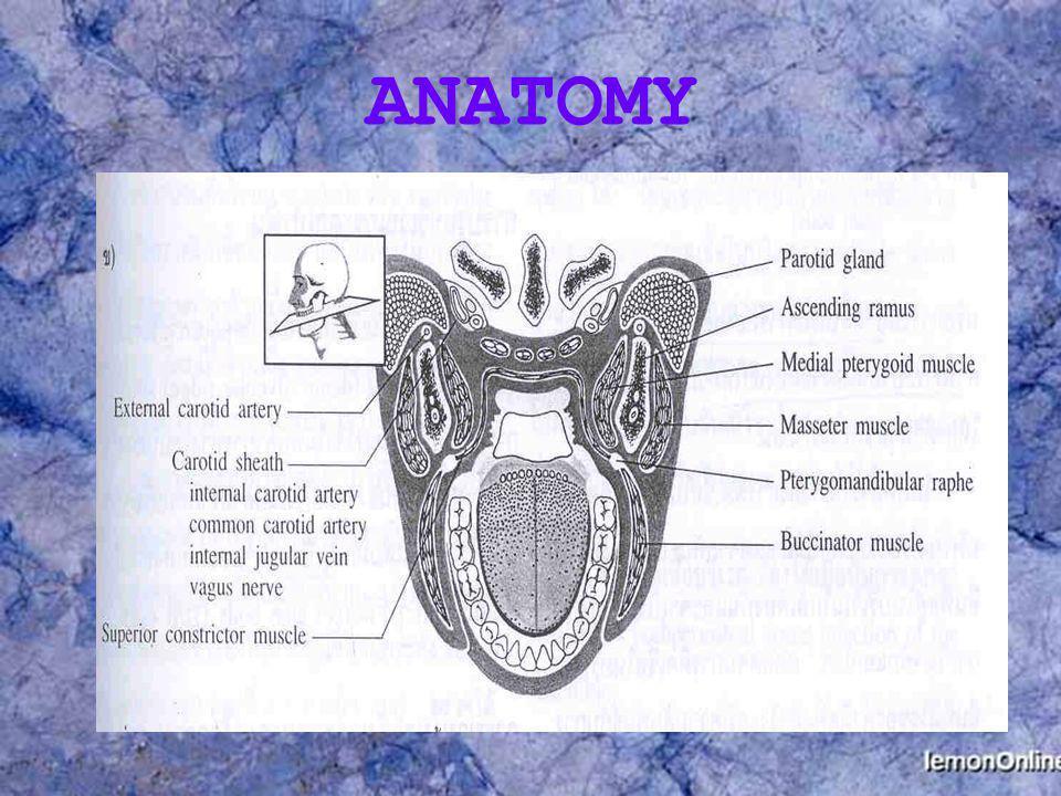 Aleolar bone Dento-alveolar ridge gum boil ไม่มีอาการรุนแรง