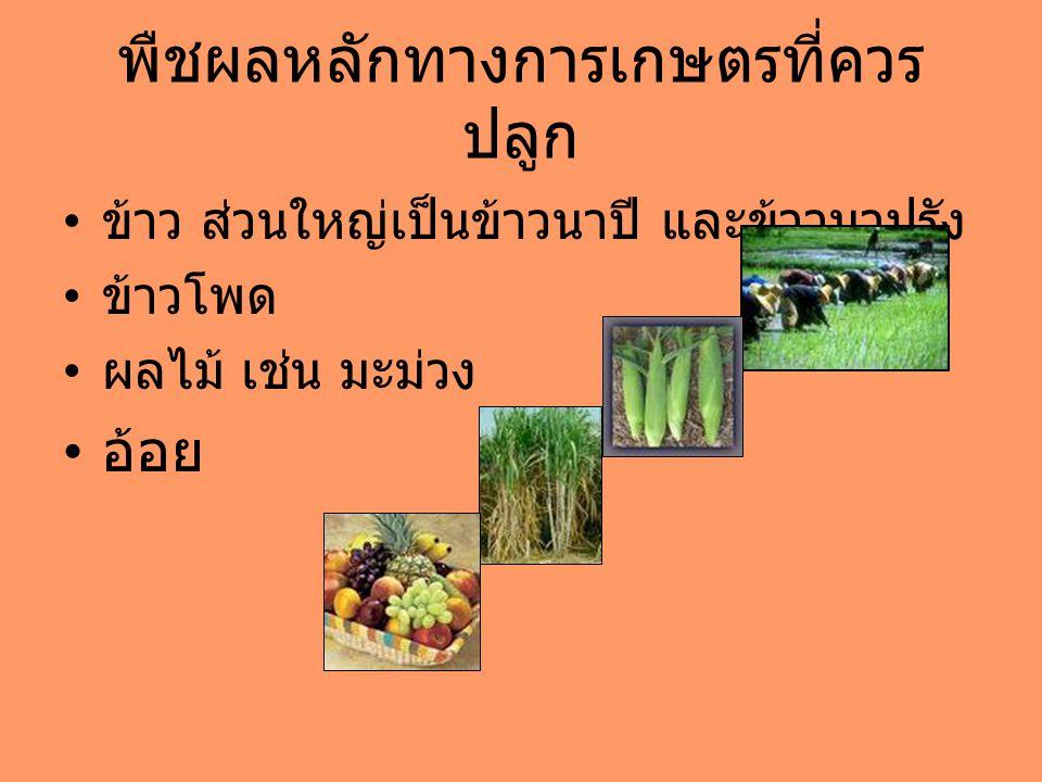 พืชผลหลักทางการเกษตรที่ควร ปลูก ข้าว ส่วนใหญ่เป็นข้าวนาปี และข้าวนาปรัง ข้าวโพด ผลไม้ เช่น มะม่วง อ้อย