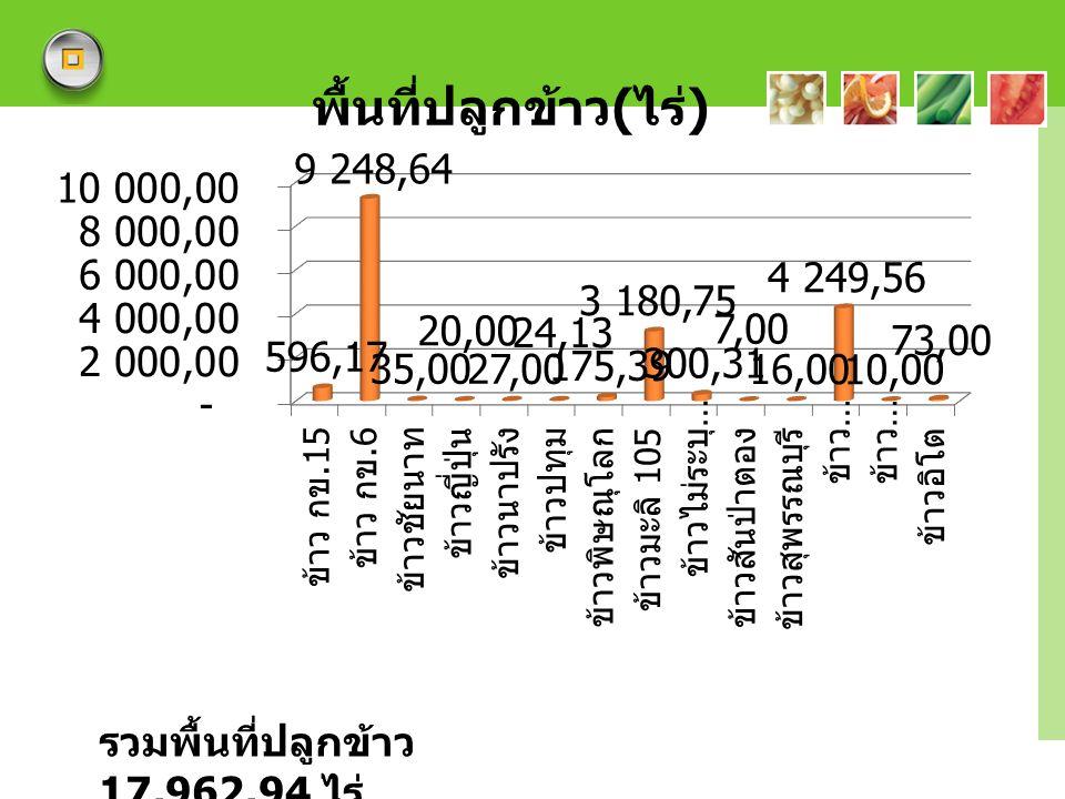 LOGO รวมพื้นที่ปลูกข้าว 17,962.94 ไร่