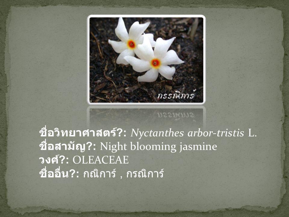 ชื่อวิทยาศาสตร์ ?: Nyctanthes arbor-tristis L. ชื่อสามัญ ?: Night blooming jasmine วงศ์ ?: OLEACEAE ชื่ออื่น ?: กณิการ์, กรณิการ์