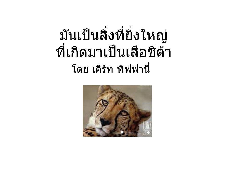 มันเป็นสิ่งที่ยิ่งใหญ่ ที่เกิดมาเป็นเสือชีต้า โดย เคิร์ท ทิฟฟานี่