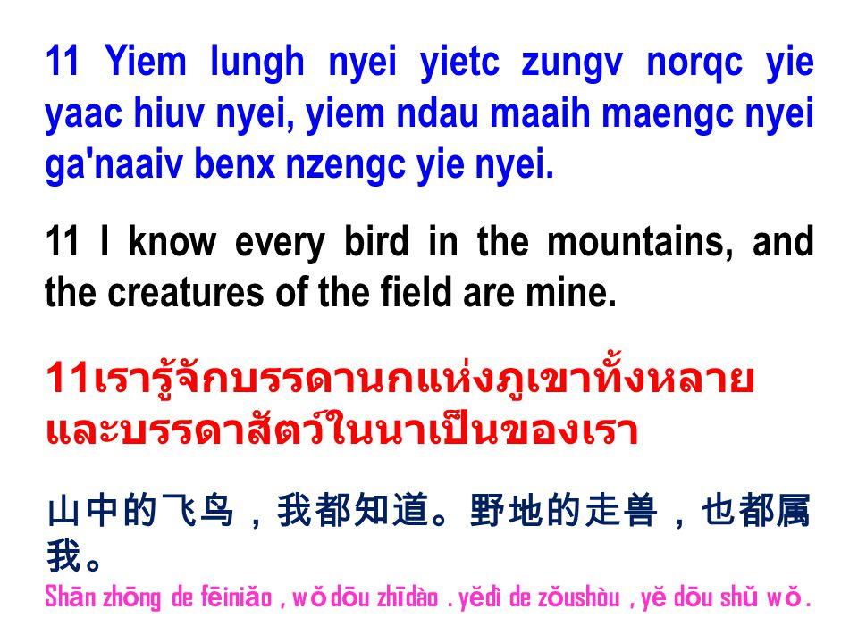 11 Yiem lungh nyei yietc zungv norqc yie yaac hiuv nyei, yiem ndau maaih maengc nyei ga'naaiv benx nzengc yie nyei. 11 I know every bird in the mounta