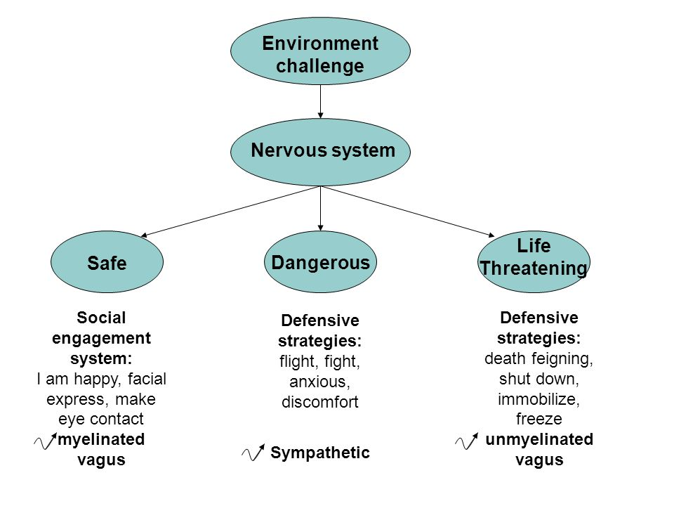 Social engagement system: I am happy, facial express, make eye contact myelinated vagus Environment challenge Nervous system Safe Dangerous Life Threatening Defensive strategies: flight, fight, anxious, discomfort Sympathetic Defensive strategies: death feigning, shut down, immobilize, freeze unmyelinated vagus