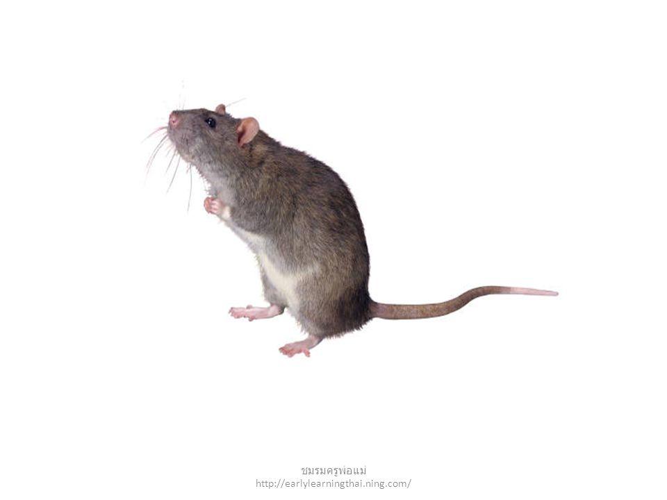 mouse ชมรมครูพ่อแม่ http://earlylearningthai.ning.com/