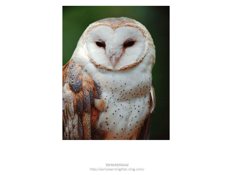 owl ชมรมครูพ่อแม่ http://earlylearningthai.ning.com/