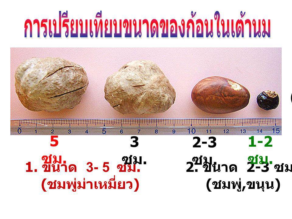 (1 ) ( 2 ) ( 3 ) ( 4 ) ( 5 ) 1. ขนาด 3- 5 ซม. 2. ขนาด 2-3 ซม. 3. ขนาด 1-2 ซม. ( ชมพู่ม่าเหมี่ยว ) ( ชมพู่, ขนุน ) ( ลำไย, มะขาม ) 5 ซม. 2-3 ซม. 1-2 ซม