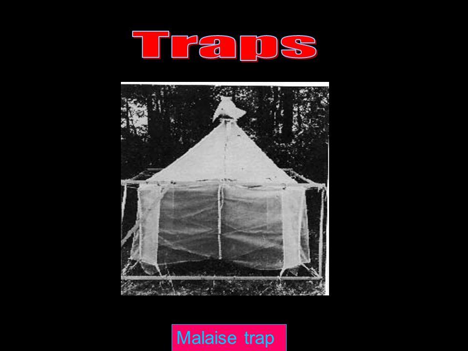 Traps Malaise trap