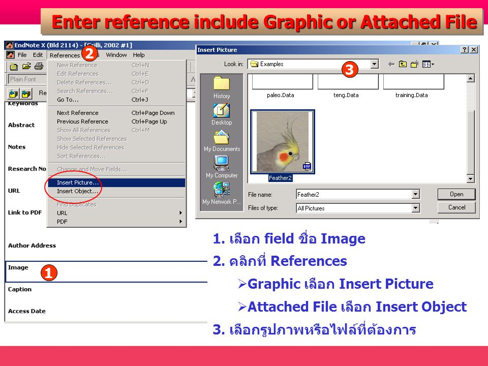 Enter reference include Graphic or Attached File Enter reference include Graphic or Attached File 1 2 1. เลือก field ชื่อ Image 2. คลิกที่ References