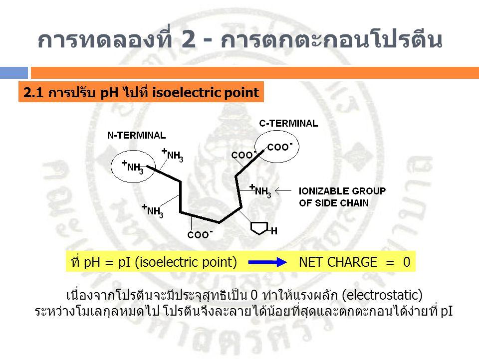 การทดลองที่ 2 - การตกตะกอนโปรตีน 2.1 การปรับ pH ไปที่ isoelectric point เนื่องจากโปรตีนจะมีประจุสุทธิเป็น 0 ทำให้แรงผลัก (electrostatic) ระหว่างโมเลกุ