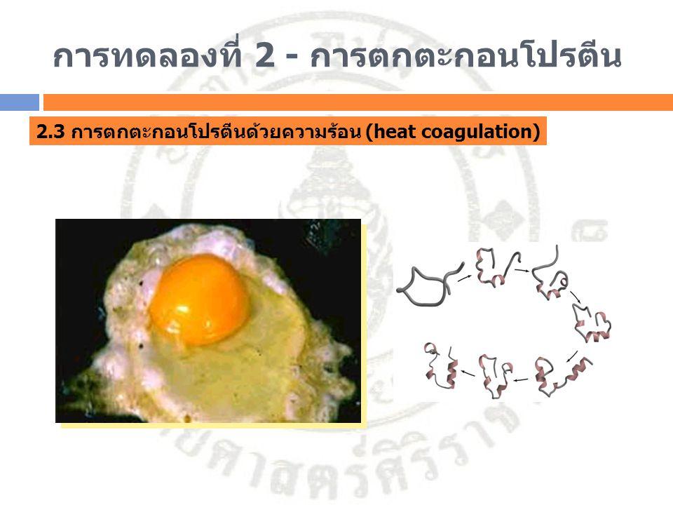 การทดลองที่ 2 - การตกตะกอนโปรตีน 2.3 การตกตะกอนโปรตีนด้วยความร้อน (heat coagulation)