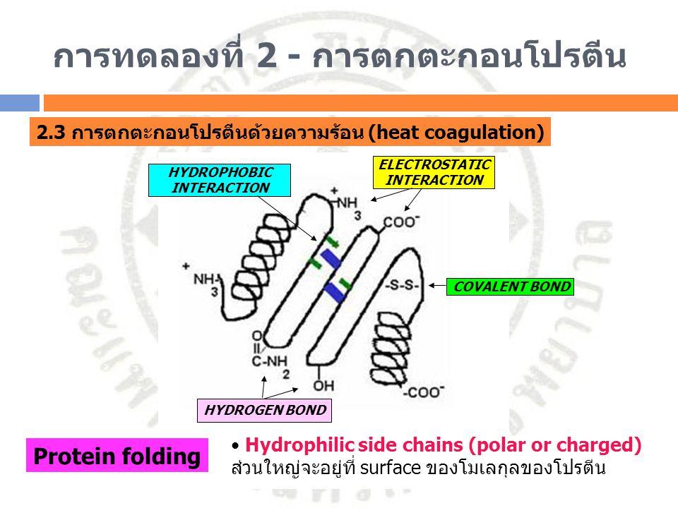 การทดลองที่ 2 - การตกตะกอนโปรตีน 2.3 การตกตะกอนโปรตีนด้วยความร้อน (heat coagulation) HYDROPHOBIC INTERACTION Protein folding Hydrophilic side chains (