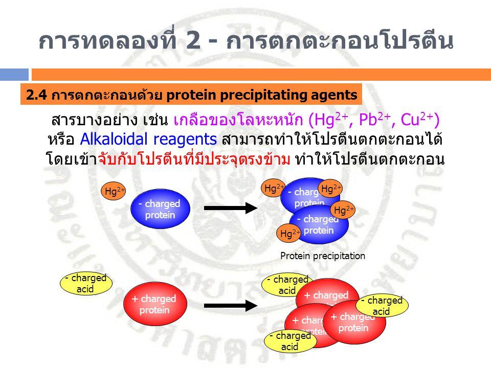 การทดลองที่ 2 - การตกตะกอนโปรตีน 2.4 การตกตะกอนด้วย protein precipitating agents สารบางอย่าง เช่น เกลือของโลหะหนัก (Hg 2+, Pb 2+, Cu 2+ ) หรือ Alkaloi
