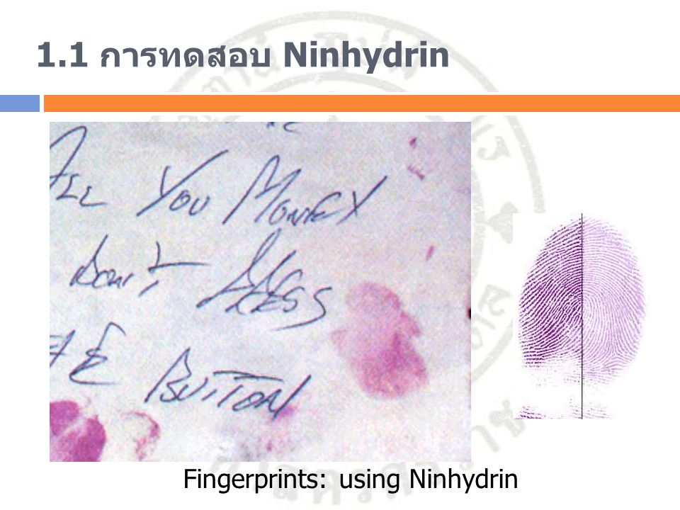 1.1 การทดสอบ Ninhydrin สารตัวอย่าง 15 หยด + Ninhydrin 2 หยด ผสมให้เข้ากัน แล้วแช่ในน้ำเดือด 2 นาที Distilled water GlycineProlineAlbuminGlobulin ลักษณะของ สารละลาย