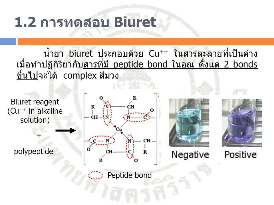 1.2 การทดสอบ Biuret น้ำยา biuret ประกอบด้วย Cu ++ ในสารละลายที่เป็นด่าง เมื่อทำปฏิกิริยากับสารที่มี peptide bond ในอณู ตั้งแต่ 2 bonds ขึ้นไปจะได้ com