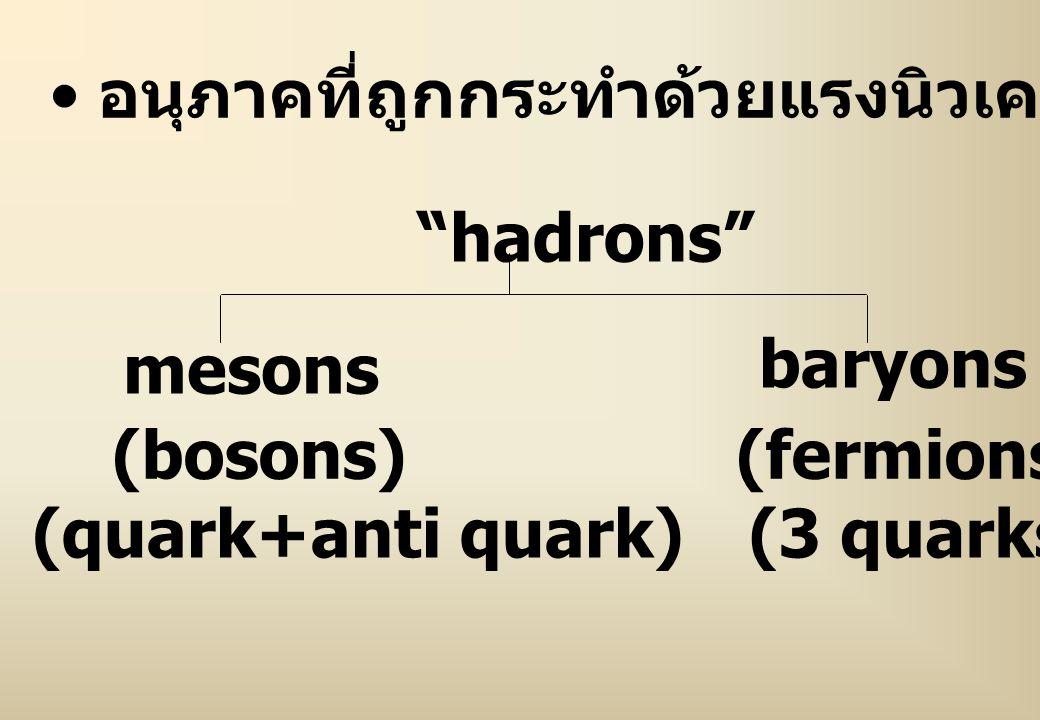 """อนุภาคที่ถูกกระทำด้วยแรงนิวเคลียร์อย่างแรง เรียกว่า """"hadrons"""" mesons (bosons) (quark+anti quark) baryons (fermions) (3 quarks)"""