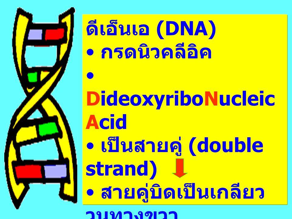 ดีเอ็นเอ (DNA) กรดนิวคลีอิค DideoxyriboNucleic Acid เป็นสายคู่ (double strand) สายคู่บิดเป็นเกลียว วนทางขวา (helix) double helix