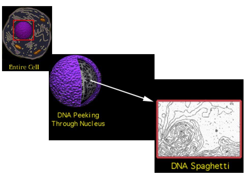 ดีเอ็นเอ (DNA) รหัสชีวิตของสิ่งมีชีวิตทุกชนิด รวมทั้งตัวเราด้วย รหัสชีวิต หรือ รหัสพันธุกรรม (genetic code) เกิดจากการเรียงตัวของนิวคลีโอไทด์ ดีเอ็นเอ สามารถจำลองตัวเองได้ เพื่อเพิ่มจำนวน และส่งถ่ายไปให้ลูกหลาน