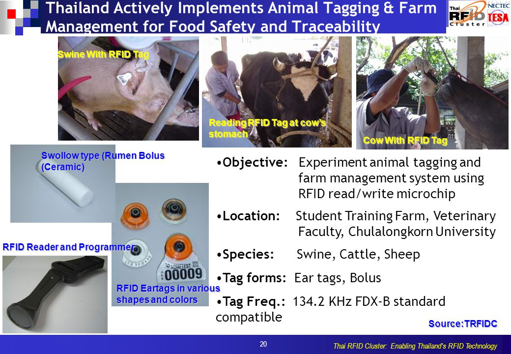 20 Thai RFID Cluster: Enabling Thailand s RFID Technology Thailand Actively Implements Animal Tagging & Farm Management for Food Safety and Traceability Objective: Experiment animal tagging and farm management system using RFID read/write microchip Location: Student Training Farm, Veterinary Faculty, Chulalongkorn University Species: Swine, Cattle, Sheep Tag forms: Ear tags, Bolus Tag Freq.: 134.2 KHz FDX-B standard compatible Swine With RFID Tag Reading RFID Tag at cow's stomach Cow With RFID Tag Swollow type (Rumen Bolus (Ceramic) RFID Eartags in various shapes and colors RFID Reader and Programmer Source:TRFIDC