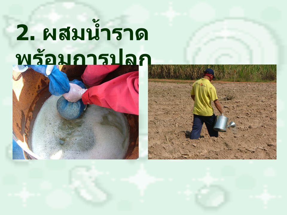 2. ผสมน้ำราด พร้อมการปลูก