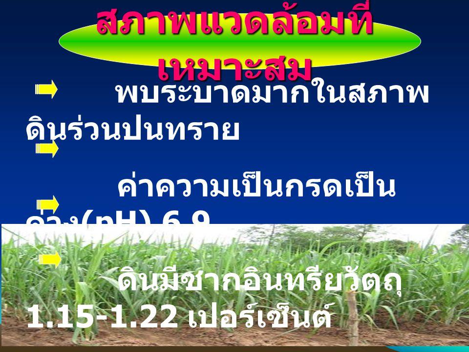 สภาพแวดล้อมที่ เหมาะสม พบระบาดมากในสภาพ ดินร่วนปนทราย ค่าความเป็นกรดเป็น ด่าง (pH) 6.9 ดินมีซากอินทรียวัตถุ 1.15-1.22 เปอร์เซ็นต์ พืชอาหารที่สำคัญ ได้
