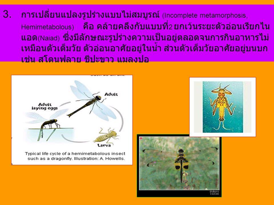 3. การเปลี่ยนแปลงรูปร่างแบบไม่สมบูรณ์ (Incomplete metamorphosis, Hemimetabolous) คือ คล้ายคลึงกับแบบที่ 2 ยกเว้นระยะตัวอ่อนเรียกไน แอด (Naiad) ซึ่งมีล