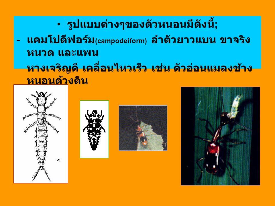 รูปแบบต่างๆของตัวหนอนมีดังนี้ ; - แคมโปดีฟอร์ม (campodeiform) ลำตัวยาวแบน ขาจริง หนวด และแพน หางเจริญดี เคลื่อนไหวเร็ว เช่น ตัวอ่อนแมลงช้าง หนอนด้วงดิ