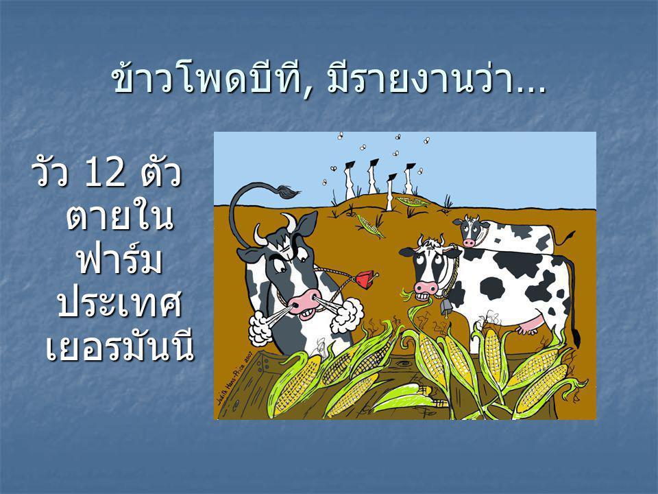 ข้าวโพดบีที, มีรายงานว่า… วัว 12 ตัว ตายใน ฟาร์ม ประเทศ เยอรมันนี