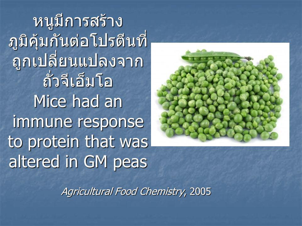 หนูมีการสร้าง ภูมิคุ้มกันต่อโปรตีนที่ ถูกเปลี่ยนแปลงจาก ถั่วจีเอ็มโอ Mice had an immune response to protein that was altered in GM peas Agricultural Food Chemistry, 2005