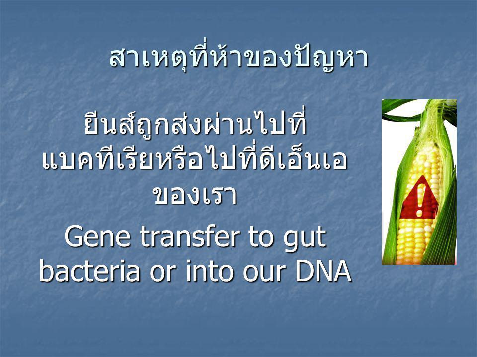 สาเหตุที่ห้าของปัญหา ยีนส์ถูกส่งผ่านไปที่ แบคทีเรียหรือไปที่ดีเอ็นเอ ของเรา Gene transfer to gut bacteria or into our DNA