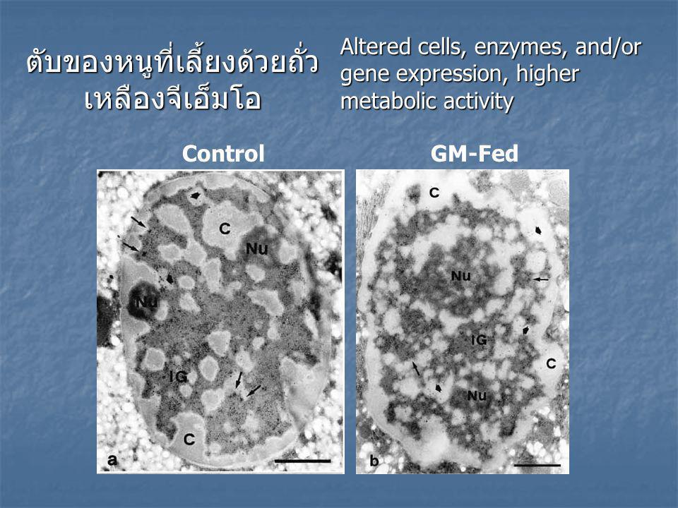 ตับของหนูที่เลี้ยงด้วยถั่ว เหลืองจีเอ็มโอ Control GM-Fed Altered cells, enzymes, and/or gene expression, higher metabolic activity