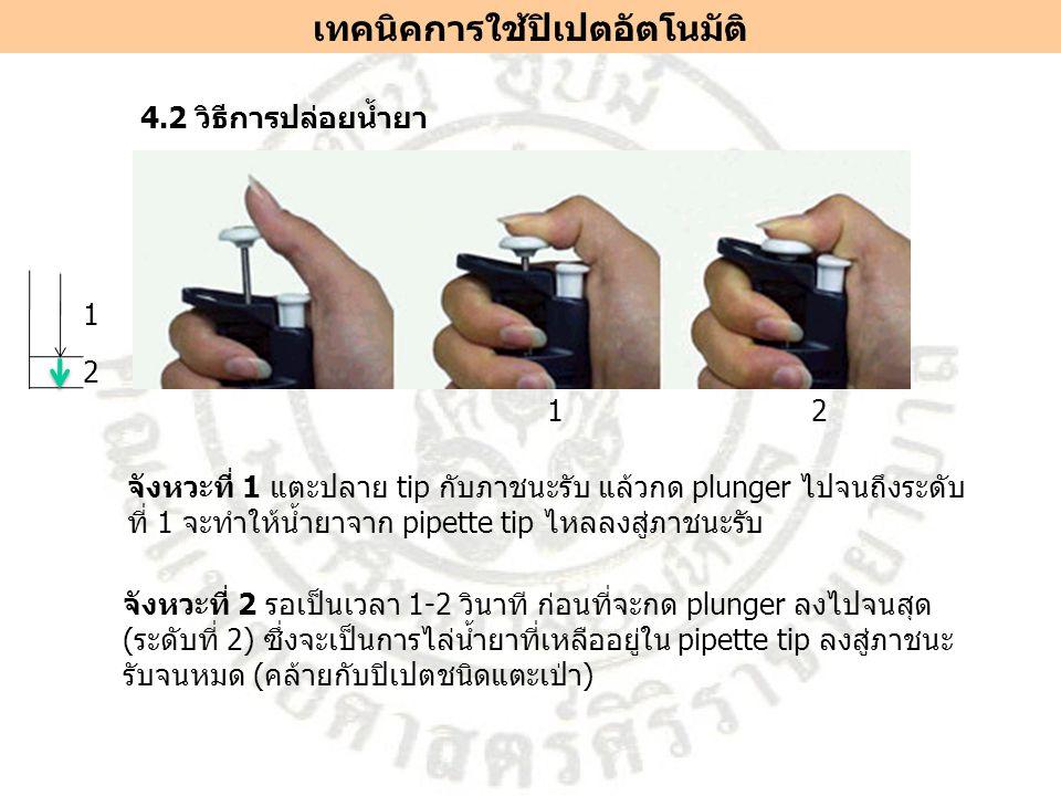 4.2 วิธีการปล่อยน้ำยา จังหวะที่ 1 แตะปลาย tip กับภาชนะรับ แล้วกด plunger ไปจนถึงระดับ ที่ 1 จะทำให้น้ำยาจาก pipette tip ไหลลงสู่ภาชนะรับ 12 จังหวะที่ 2 รอเป็นเวลา 1-2 วินาที ก่อนที่จะกด plunger ลงไปจนสุด (ระดับที่ 2) ซึ่งจะเป็นการไล่น้ำยาที่เหลืออยู่ใน pipette tip ลงสู่ภาชนะ รับจนหมด (คล้ายกับปิเปตชนิดแตะเป่า) เทคนิคการใช้ปิเปตอัตโนมัติ 1 2
