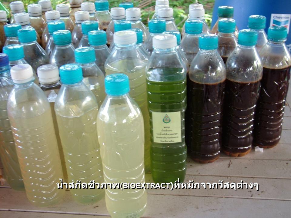 เศษอาหารเศษวัสดุ ที่ใช้นำมาหมักน้ำสกัดชีวภาพ เศษอาหารเศษวัสดุ ที่ใช้นำมาหมักน้ำสกัดชีวภาพ