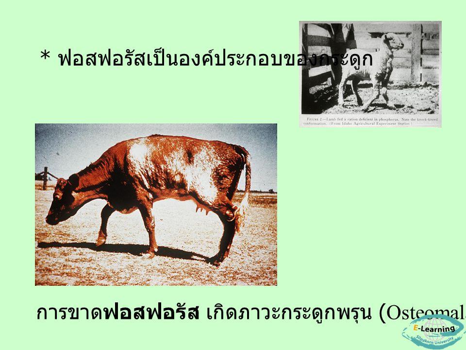 การขาดฟอสฟอรัส เกิดภาวะกระดูกพรุน (Osteomalacia) * ฟอสฟอรัสเป็นองค์ประกอบของกระดูก
