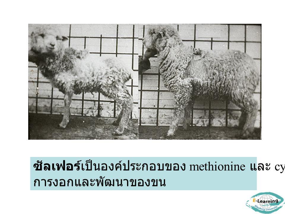 ซัลเฟอร์เป็นองค์ประกอบของ methionine และ cystine มีผลต่อ การงอกและพัฒนาของขน