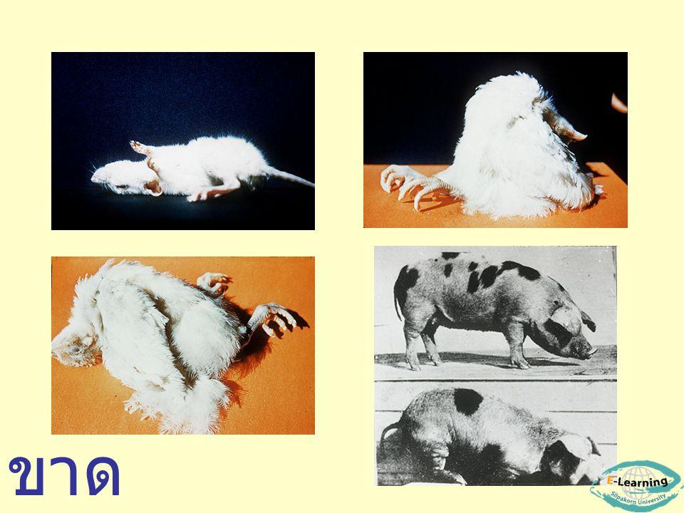 Niacin deficiency (Vit.