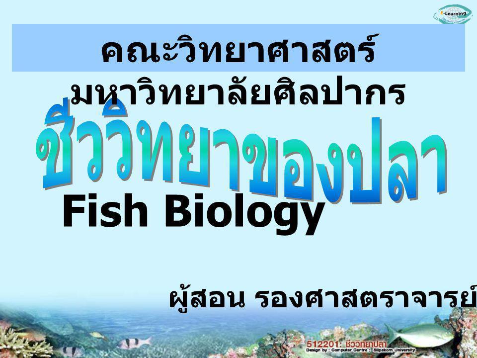 ผู้สอน รองศาสตราจารย์ อรุณี สมมณี Fish Biology คณะวิทยาศาสตร์ มหาวิทยาลัยศิลปากร