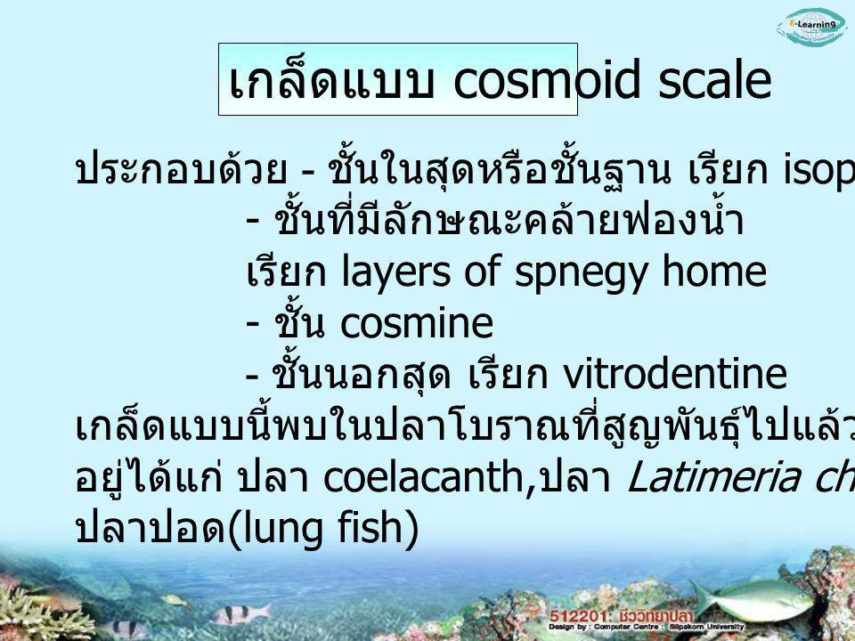 เกล็ดแบบ cosmoid scale ประกอบด้วย - ชั้นในสุดหรือชั้นฐาน เรียก isopedine - ชั้นที่มีลักษณะคล้ายฟองน้ำ เรียก layers of spnegy home - ชั้น cosmine - ชั้นนอกสุด เรียก vitrodentine เกล็ดแบบนี้พบในปลาโบราณที่สูญพันธุ์ไปแล้วและที่ยังมีชีวิต อยู่ได้แก่ ปลา coelacanth, ปลา Latimeria chalumnae, ปลาปอด (lung fish)